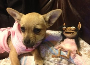 It was a bonding moment for Kelly Murphy and I when I learned that she, too, has a 4 pound chihuahua and she learned that I, too, have a gremlin.
